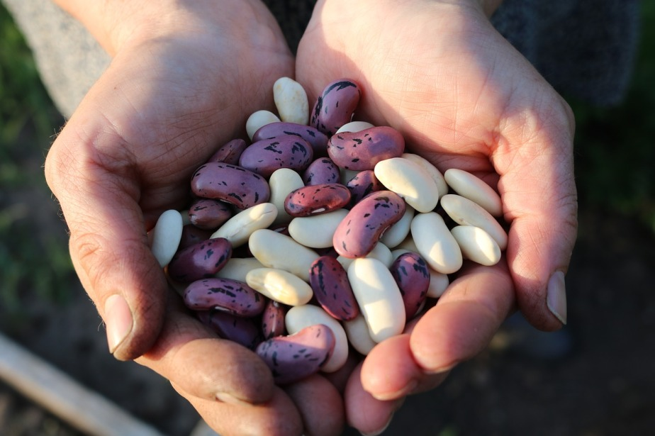 runner-beans-1835646_1280.jpg
