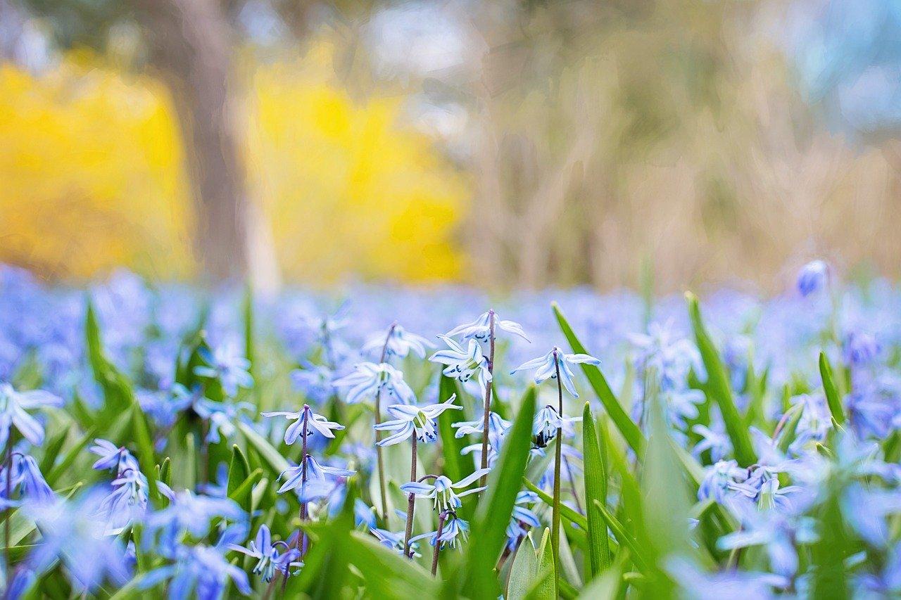 spring-flowers-741965_1280.jpg